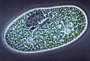 Микробы атеизма